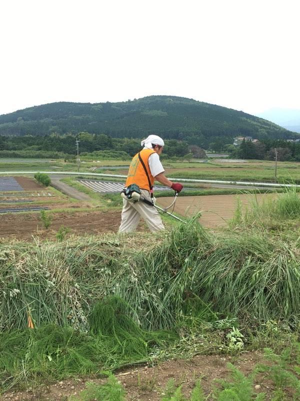 草刈り部隊活躍中